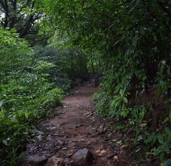 Paithalam Forest Path