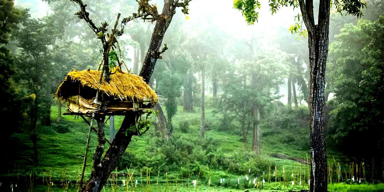 Muthanga Wild Life Sanctuary