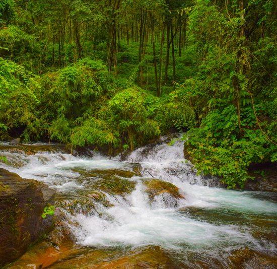 Paithalamala The Stream