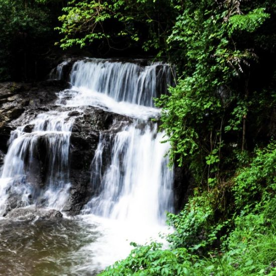 Ariyil Waterfalls Kannur