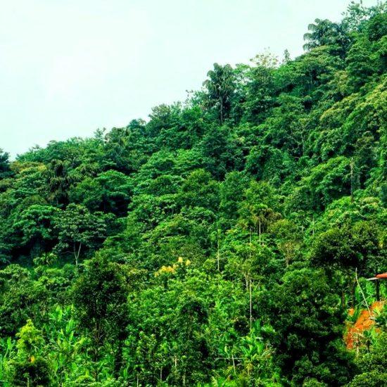 Paithal Jungle Camp Homestay Kannur