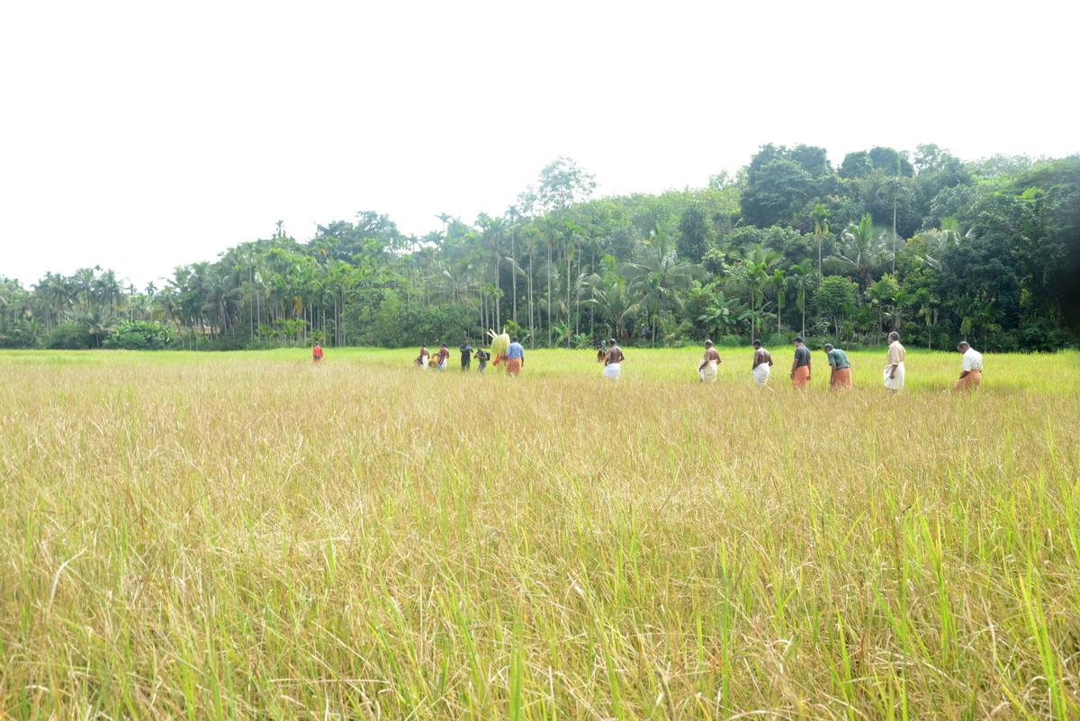 Theyyam Travel Blog